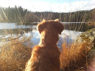 Unga hundar, b-provsinriktning