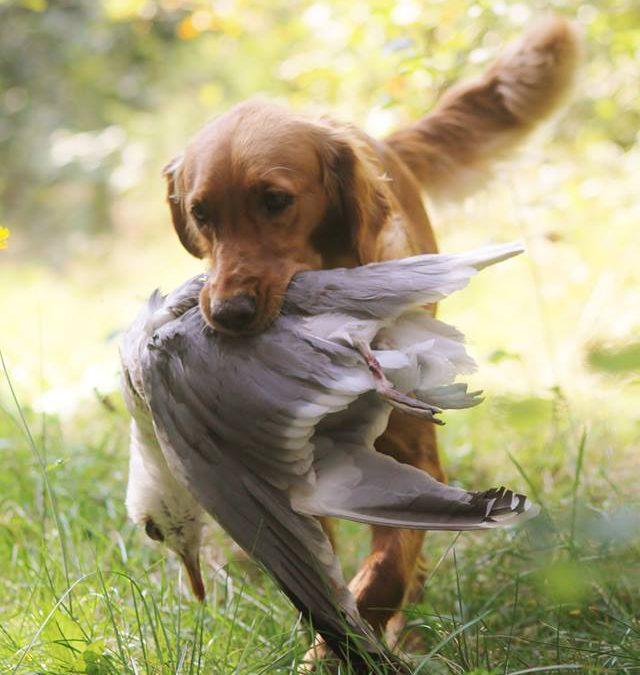 Unga hundar, b-provs inriktning