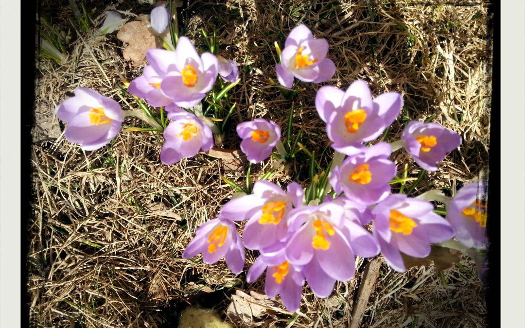 Visst gör det ont när knoppar brister. Varför skulle våren annars tveka?