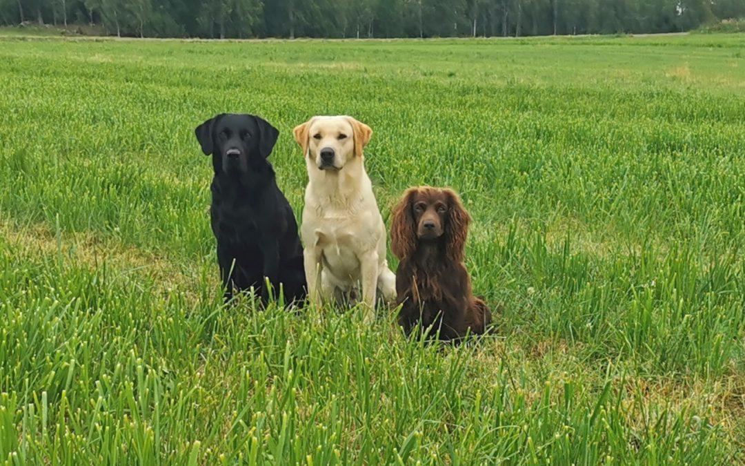 Unga hundar fortsätter inriktning b-prov måndagar