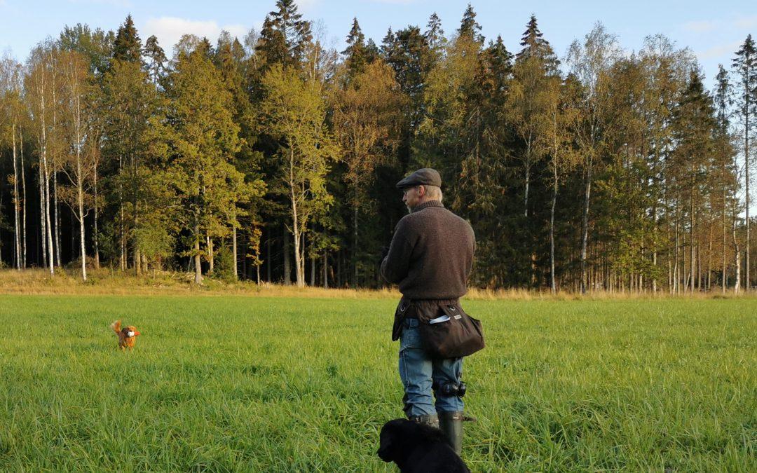 Unga hundar fortsätter inriktning b-prov torsdagar