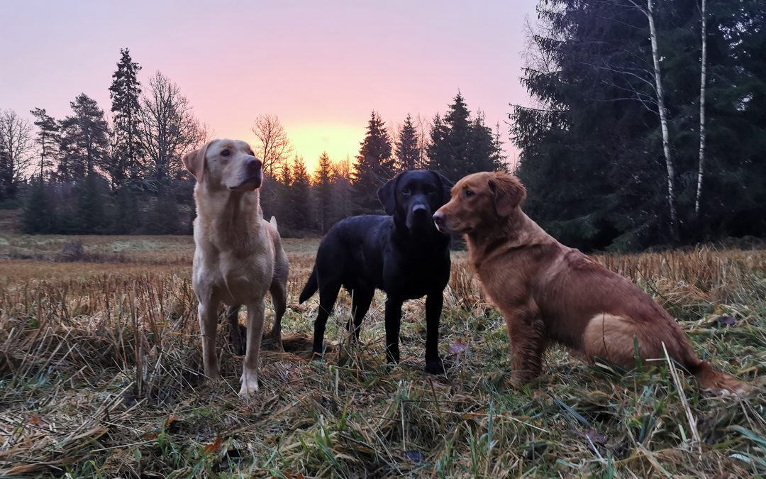 A home without a gundog is just a house…